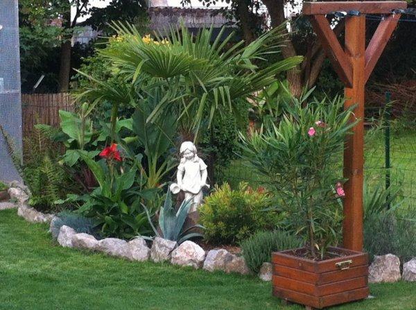 Massif exotique mes oiseaux - Massif avec palmier ...