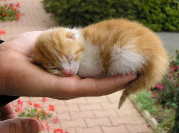 Voici des petit chatons trop mimi blog de nounouck26 - Image de chaton trop mimi ...