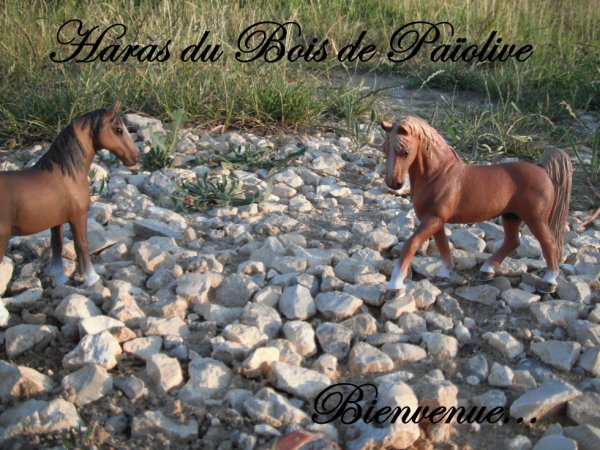 Bienvenue au Haras du Bois De Paiolive !! ;)