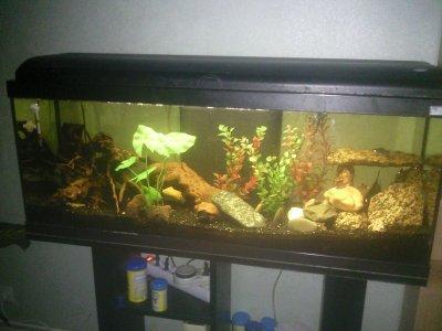 aquarium 120l poisson d 39 aquarium. Black Bedroom Furniture Sets. Home Design Ideas