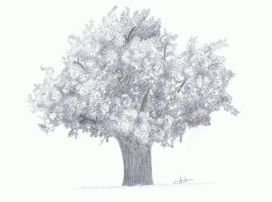 Dessiner un arbre portraits et dessins - Arbre dessiner ...