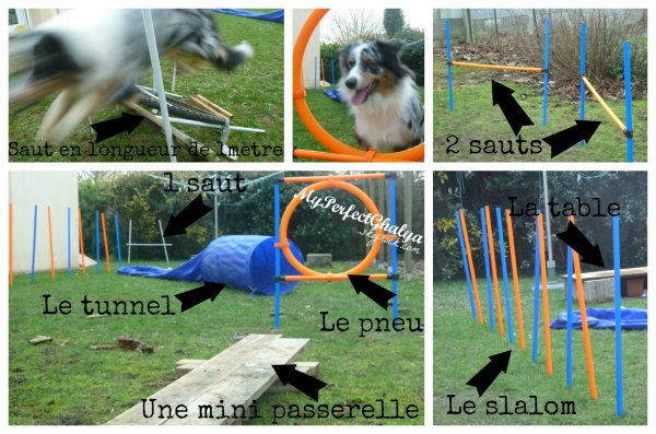 Blog de little blue dog page 3 for Agility au jardin