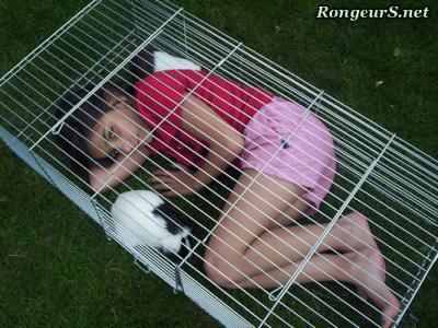 cage lapin rex. Black Bedroom Furniture Sets. Home Design Ideas