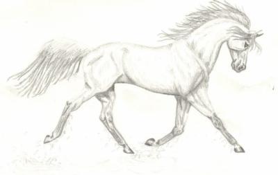 Blog de dessins chevauxdu07 dessins chevaux et image - Comment dessiner un cheval au galop ...