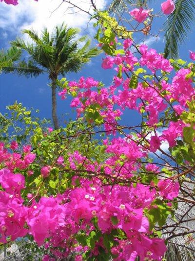 La Femme Endormie Dans Le Jardin Des Fleurs Vari Es Des