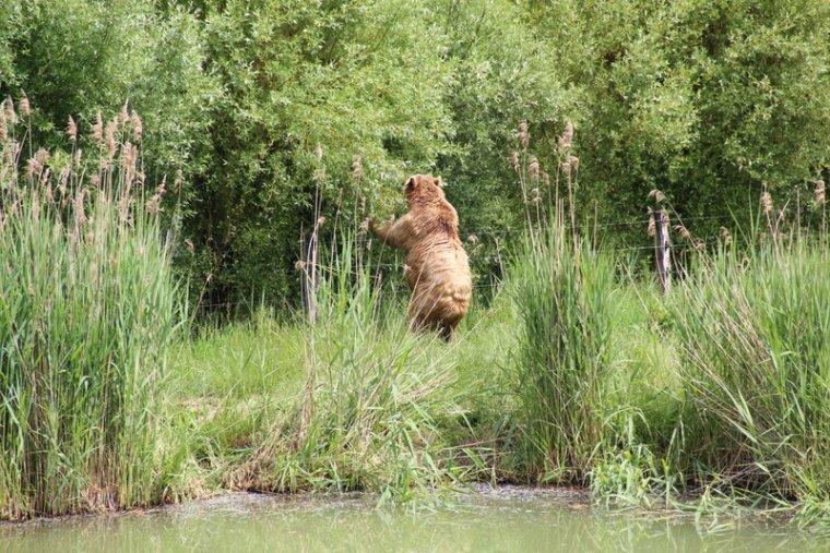 Parc animalier de sainte croix dans le 57 blog de for Parc animalier dans les yvelines