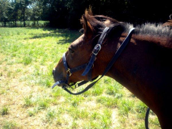 """""""Un cheval r�tif marche derri�re vous, un cheval impatient se prom�ne en face de vous, mais un compagnon noble marche � c�t� de vous."""""""