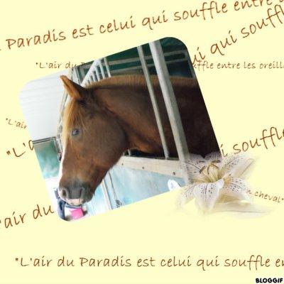 L'air du Paradis est celui qui souffle entre les oreilles d'un cheval
