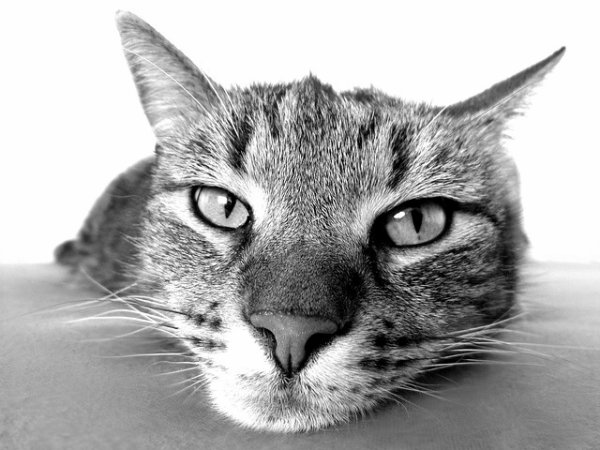 chatons,<a class=