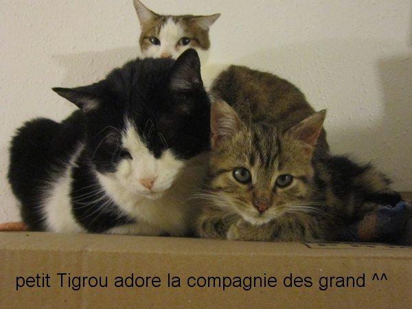 Petit TIGROU :)