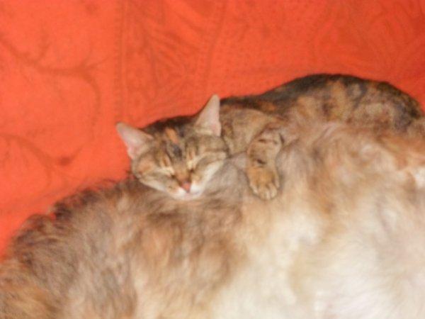 Olga et Mistouflette...