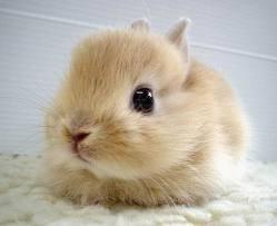 le plus beau lapin au monde