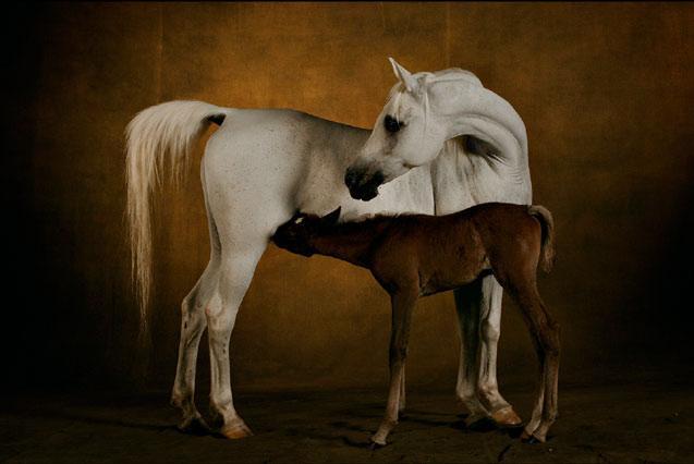 horse2908