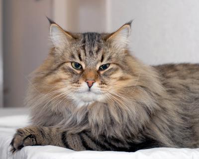 Le nom du chat de cleopatre