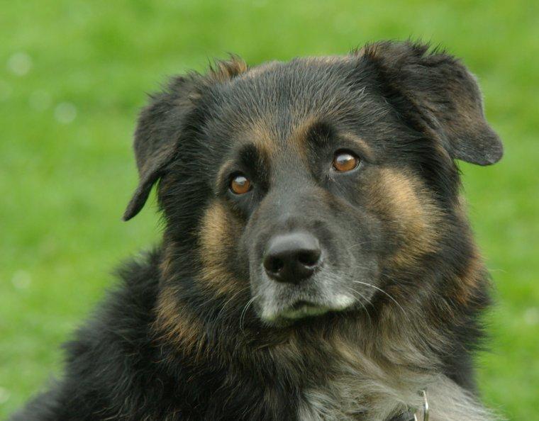 Le plus beau chien du monde si si la libert etc - Le plus beau magasin du monde ...