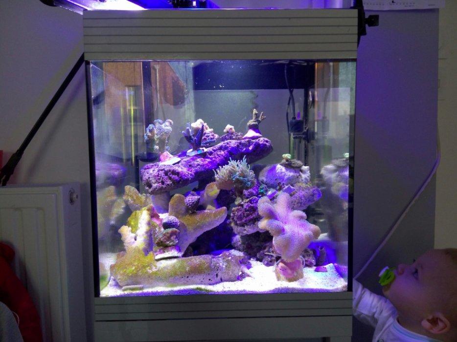 Aquarium eau de mer 50l for Poisson aquarium 60l
