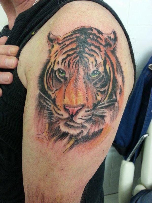 Tete de tigre tattoo - Image tete de tigre ...