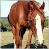 Il n'y a pas de secrets aussi intimes que ceux d'un cavalier et de son cheval . ♥