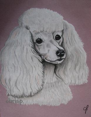 Caniche royal blanc art dessins et peintures - Dessin caniche ...