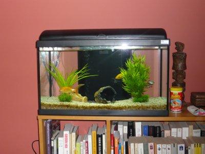 Aquarium mes petits oiseaux exotiques for Aquarium poisson rouge changer l eau