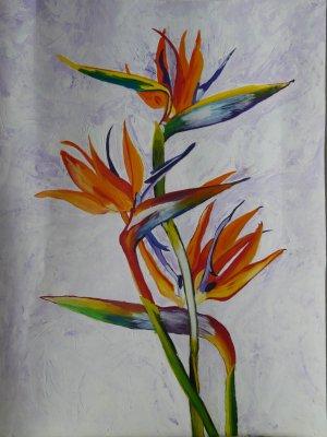 L 39 oiseau du paradis l 39 art la peinture ma passion - Fleur oiseau de paradis ...