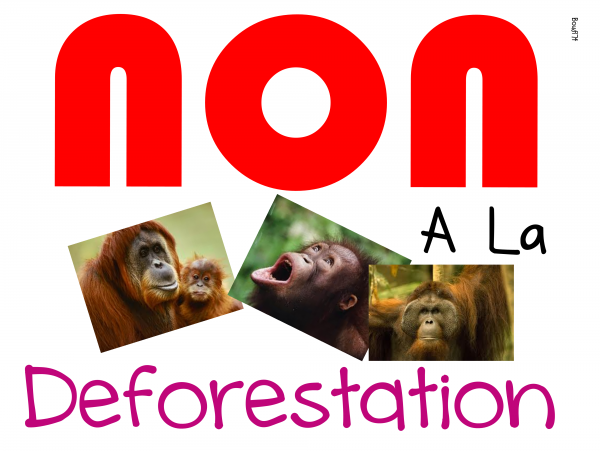 NON  � la Deforestation