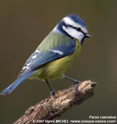 Un petit oiseau the blog of d j 39 for Un petit oiseau