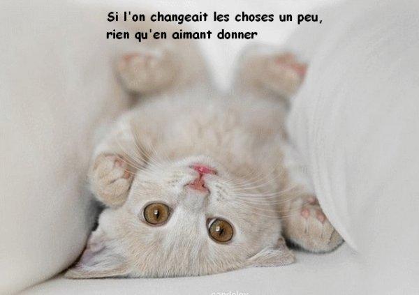 Trop mimi les chatons ma vie - Image de chaton trop mimi ...