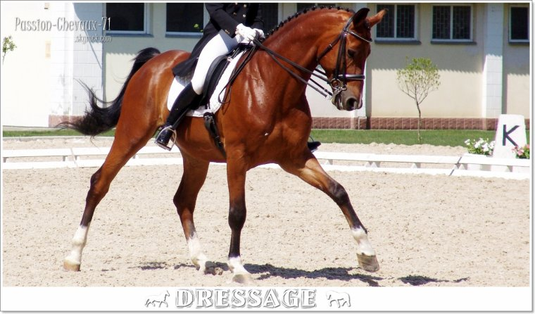 Dressage saut d obstacle cross blog de passion chevaux 71 - Frison saut d obstacle ...