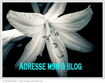Adresse msn, blog & avatar
