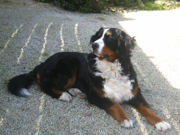 Le plus beau chien du monde blog de notrelouloue1 for Le plus beau canape du monde