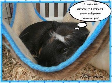 Lit pour cochon d inde animalerie sur enperdresonlapin - Fabriquer cage cochon d inde ...