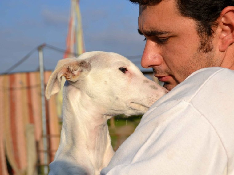 "Adoption ,galgos ,podencos              ""   Scooby France """