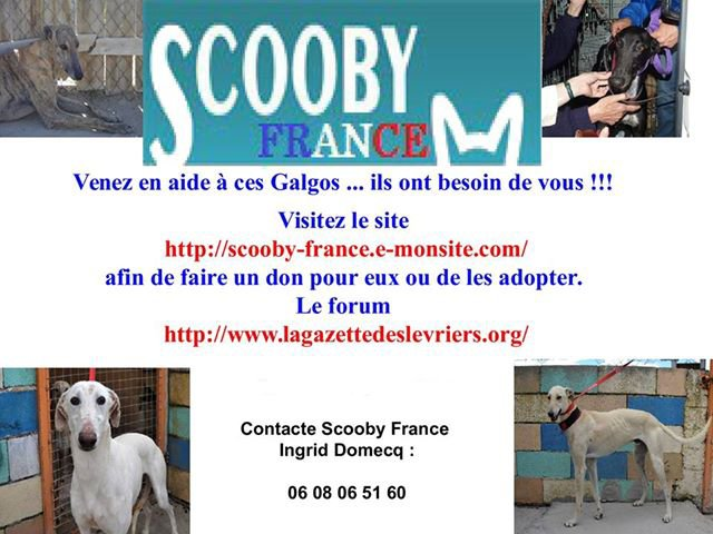 "Adoption Galgos ""Scooby France"""