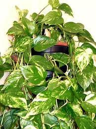 Blog de fuciarelli2 page 8 la nature for Plantes vertes appartement