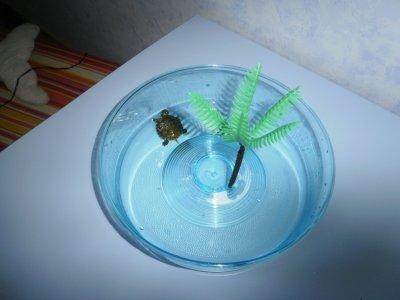 Blog de qm24 tortue quentin for Petit aquarium rond