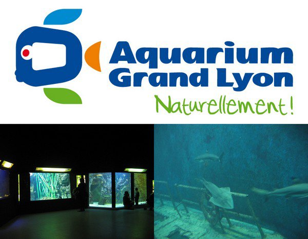 aquarium du grand lyon les parcs d attractions fran 231 ais