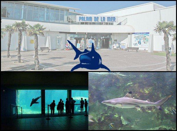 seaquarium grau du roi les parcs d attractions fran 231 ais