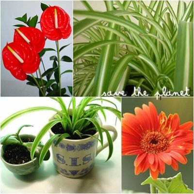 Blog de save the planet x - Plante depolluante interieur ...
