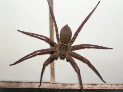 Gentille araign e amoureux de la guyane je vous montre i i - Une araignee dans la salle de bain ...