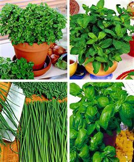 Blog de cuisine et saveurs blog de cuisine et saveurs - Plantes aromatiques cuisine ...