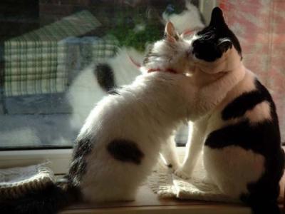 pour vous, c'est quoi, bien embrasser ?  1434811633_small