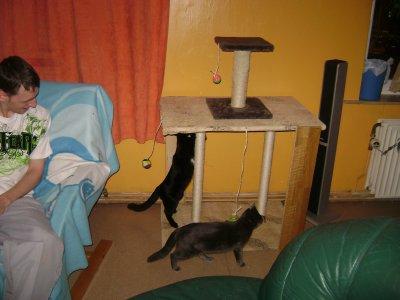 arbre a chat tes chez d 39 jou la. Black Bedroom Furniture Sets. Home Design Ideas