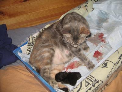 Comment deux chats ensemble peuvent vivre