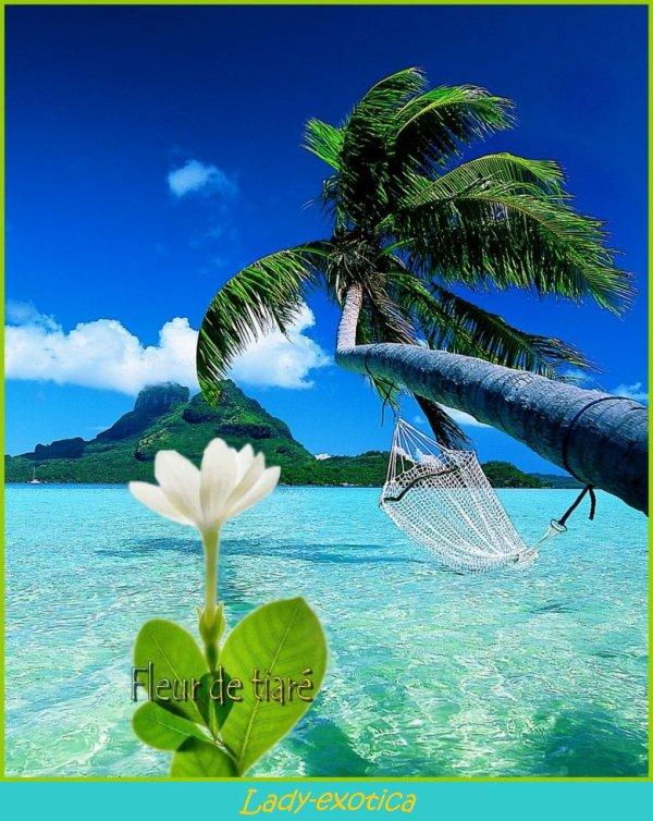Blog de lady exotica blog de lady exotica for Chambre 13 tahiti plage