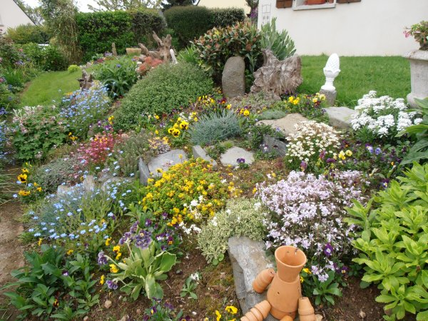 Rocaille en fleurs ma collection de plantes succulentes for Parterre rocaille