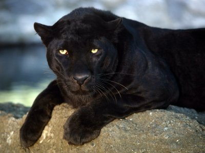 Le peuple léopard. Tugwaan et les siens - Yves Christen