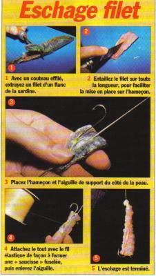 Voici comment m ttre un filet de sardine roro33 - Comment cuisiner des filets de sardines ...