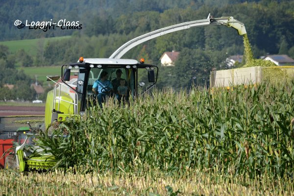 Ensilage de Ma�s 2013 --> --> Claas Jaguar 940 [Part II ]