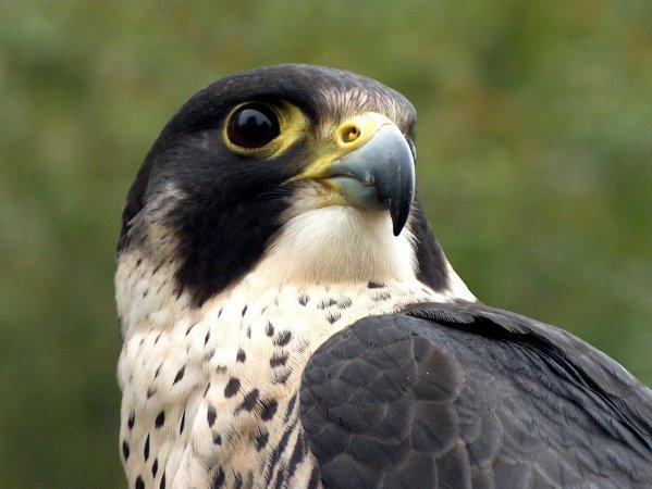 L'oiseau le plus rapide au monde 2869381060_small_1